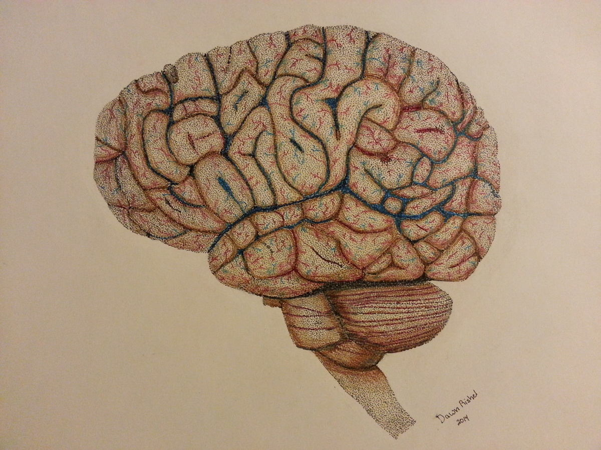 Expressionist Colored pencil Drawings: Anatomy study of the brain ...
