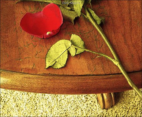 rose on cherrywood