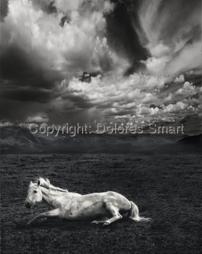 White Horse, Storm Clouds, Colorado