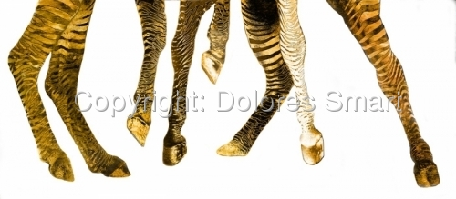 Zebra Rockettes, Gold