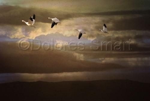 Morning Flight, Bosque