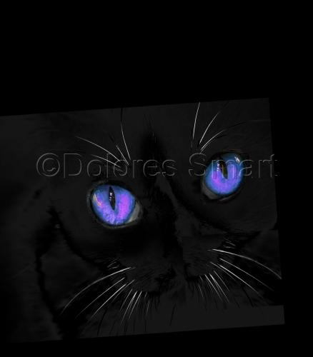 Violet Eyed Cat
