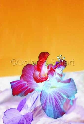 Hyper Flower
