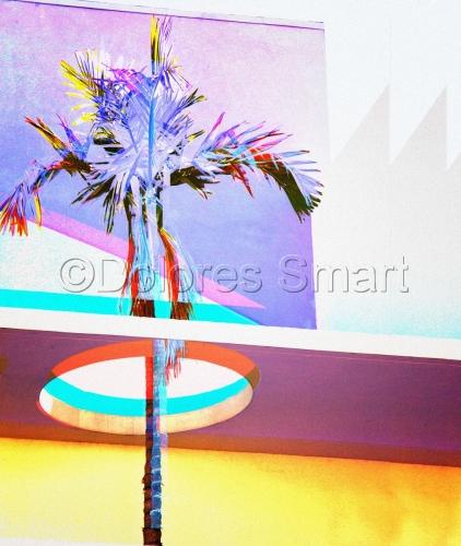 Holey Palm Tree, Miami Beach