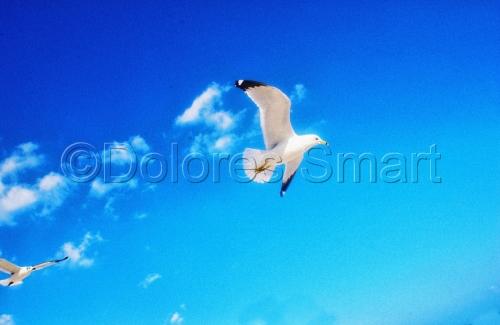 Miami Beach Sea Gulls