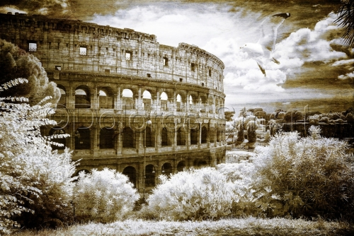 Coliseum with Sea Gull