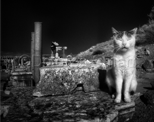 Series, Cats at Ephesus, Turkey #1