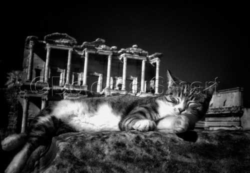 Series, Cats at Ephesus, Turkey #2