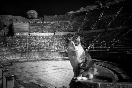 Series, Cats at Ephesus, Turkey #3