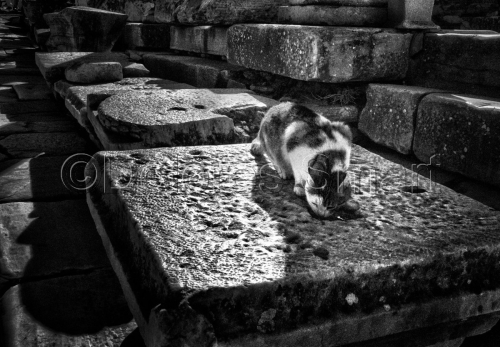 Series, Cats at Ephesus, Turkey #4