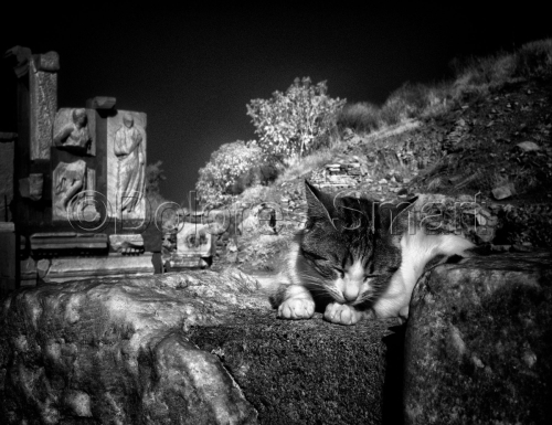 Series, Cats at Ephesus, Turkey #5