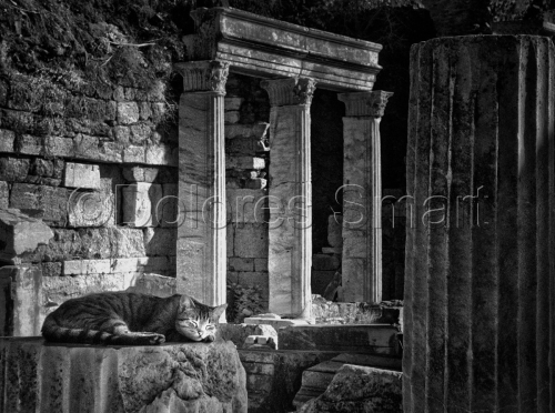 Series, Cats at Ephesus, Turkey #6