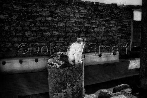 Series, Cats at Ephesus, Turkey #7