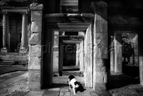 Series, Cats at Ephesus #8