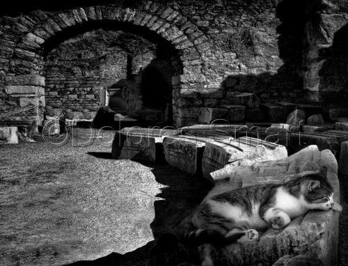 Series Cats at Ephesus, Turkey #10