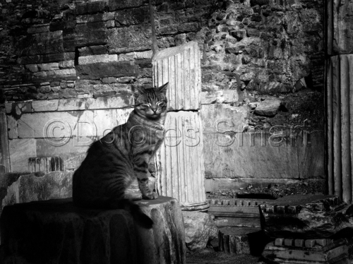 Series, Cats at Ephesus, Turkey #11