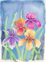 Batik Orchids (thumbnail)