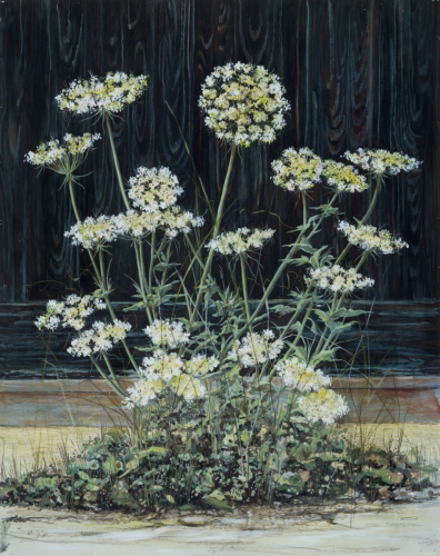 Queen Anne's Lace in Winchester by Dorette Amell