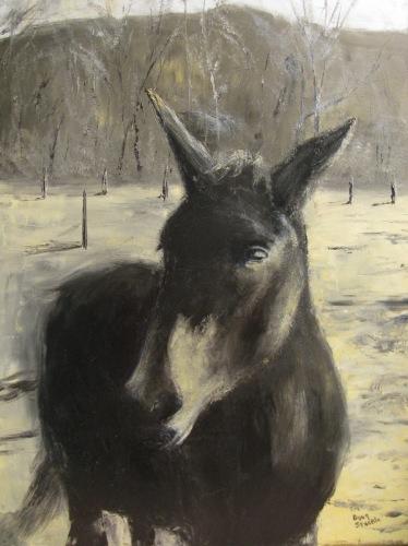Medora Mule