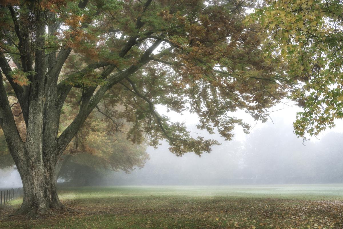 Autumn Morning I  (large view)