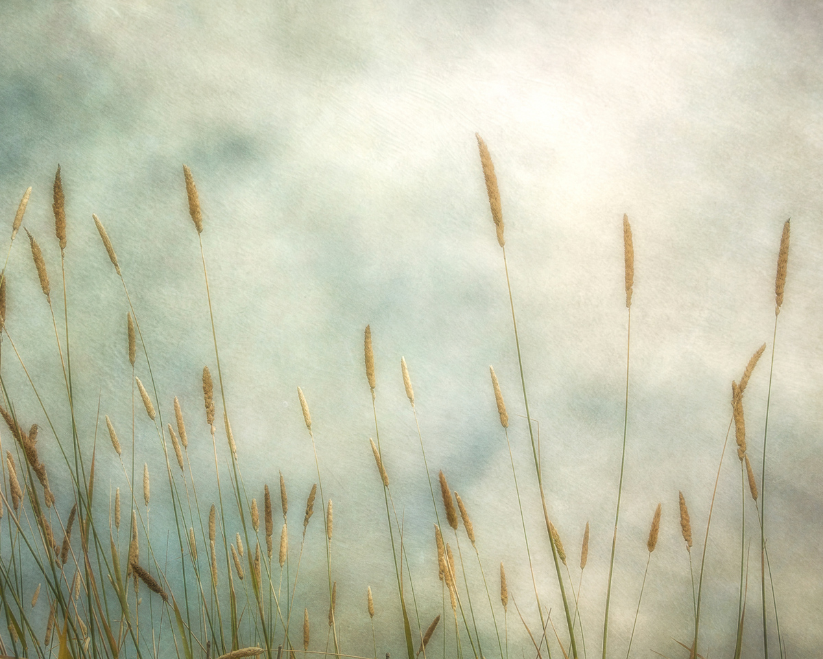 Dune Grass II (large view)