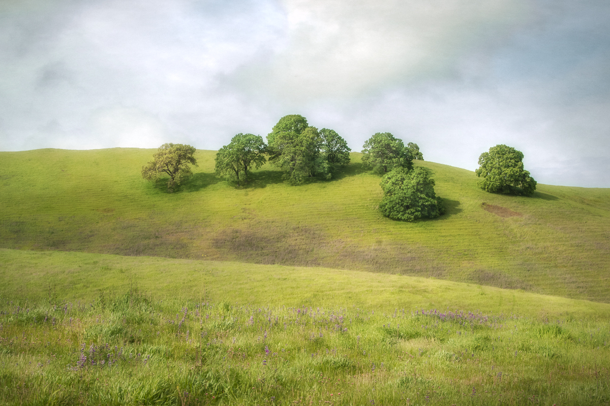 Solano Hills I (large view)