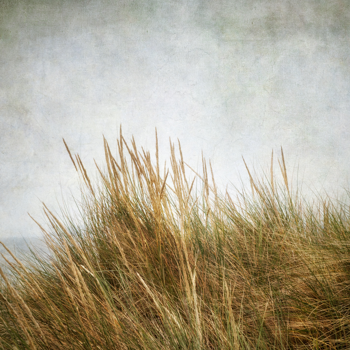 Beach Grass II (large view)