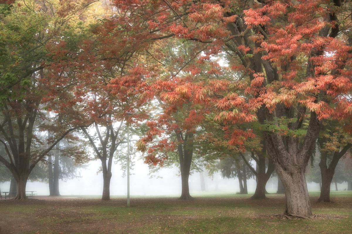 Autumn Morning IV (large view)