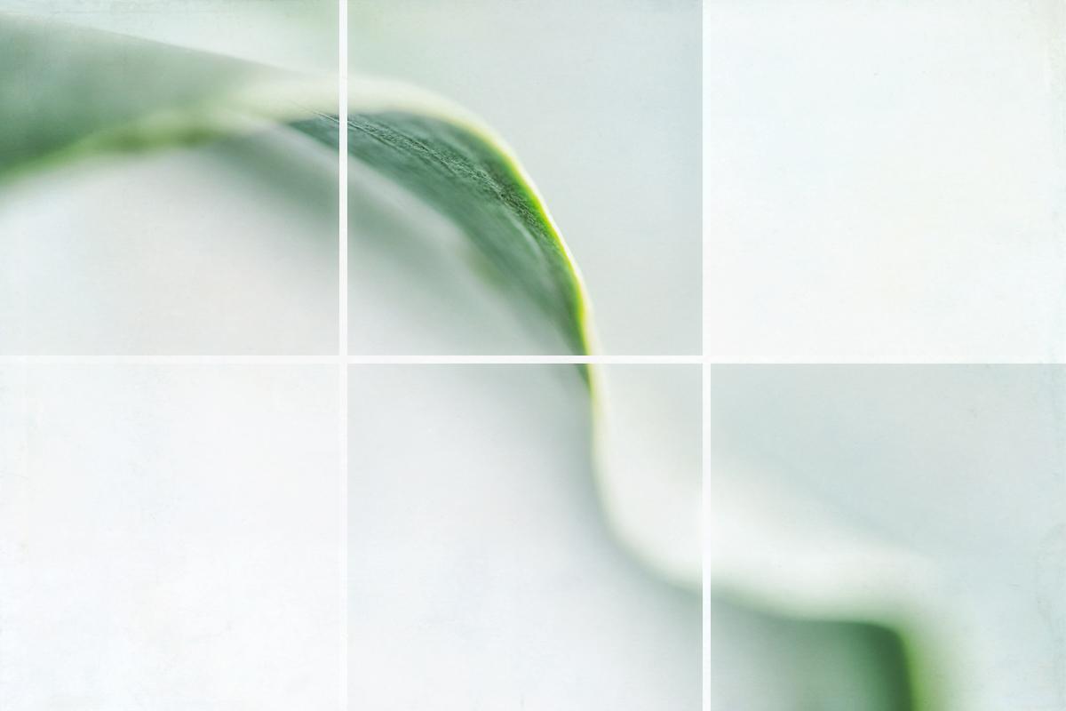 Calla Leaf II (large view)