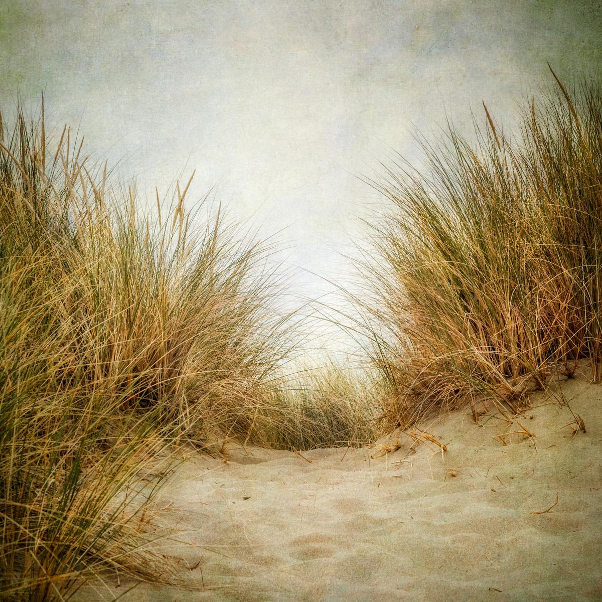 Beach Grass I (large view)