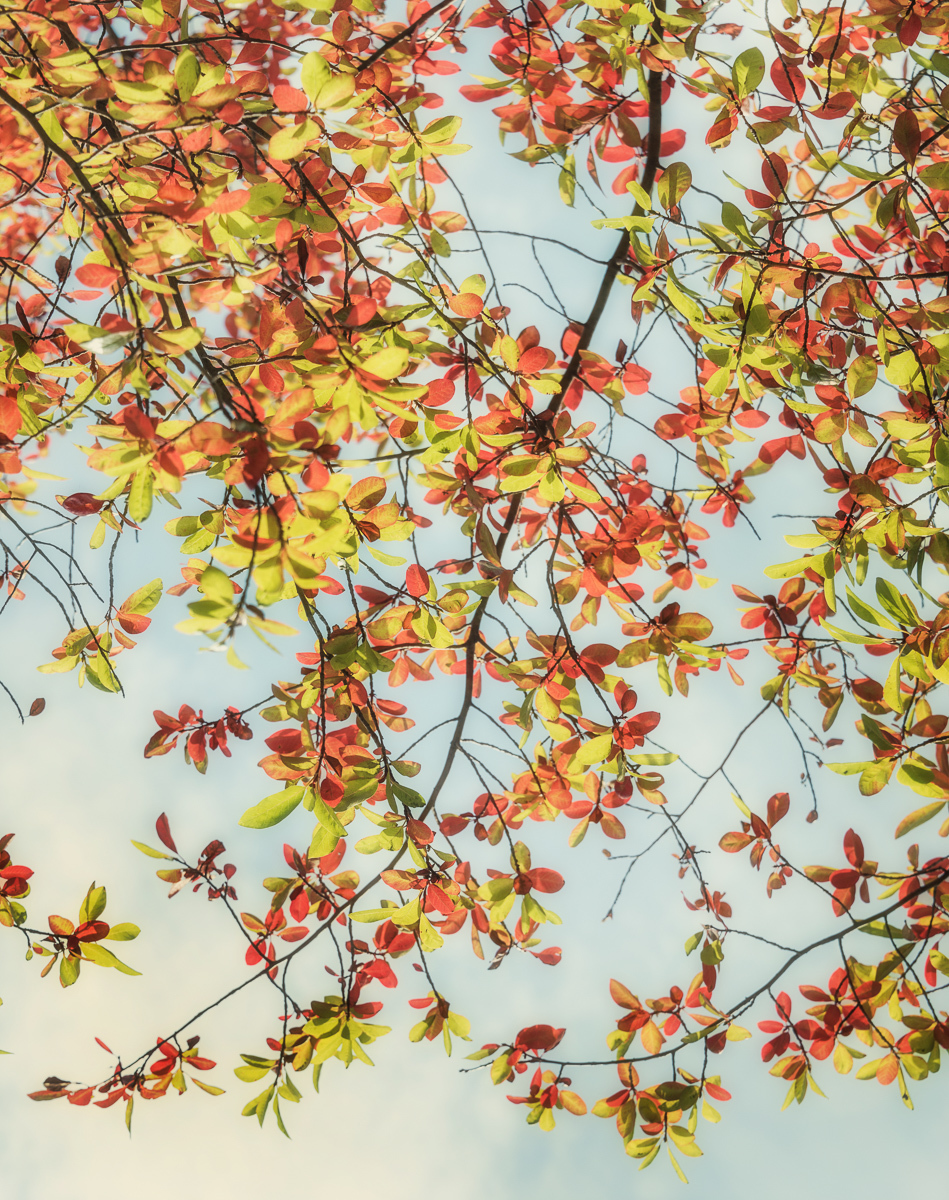 Autumn Splendor (large view)