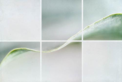 Calla Leaf I (large view)