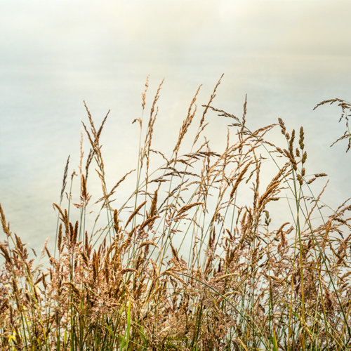 Bluff Grass II (large view)