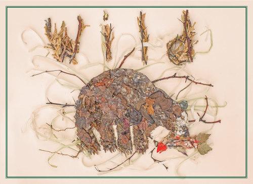 Wild Bear by Dorothy Prescott
