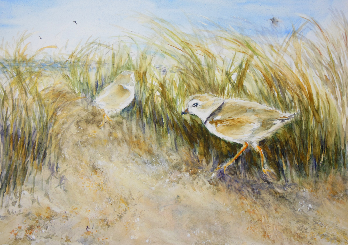 Pair of Piping Plovers (large view)