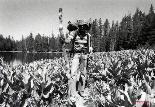DsVision America - John Muir Trail D Stevens