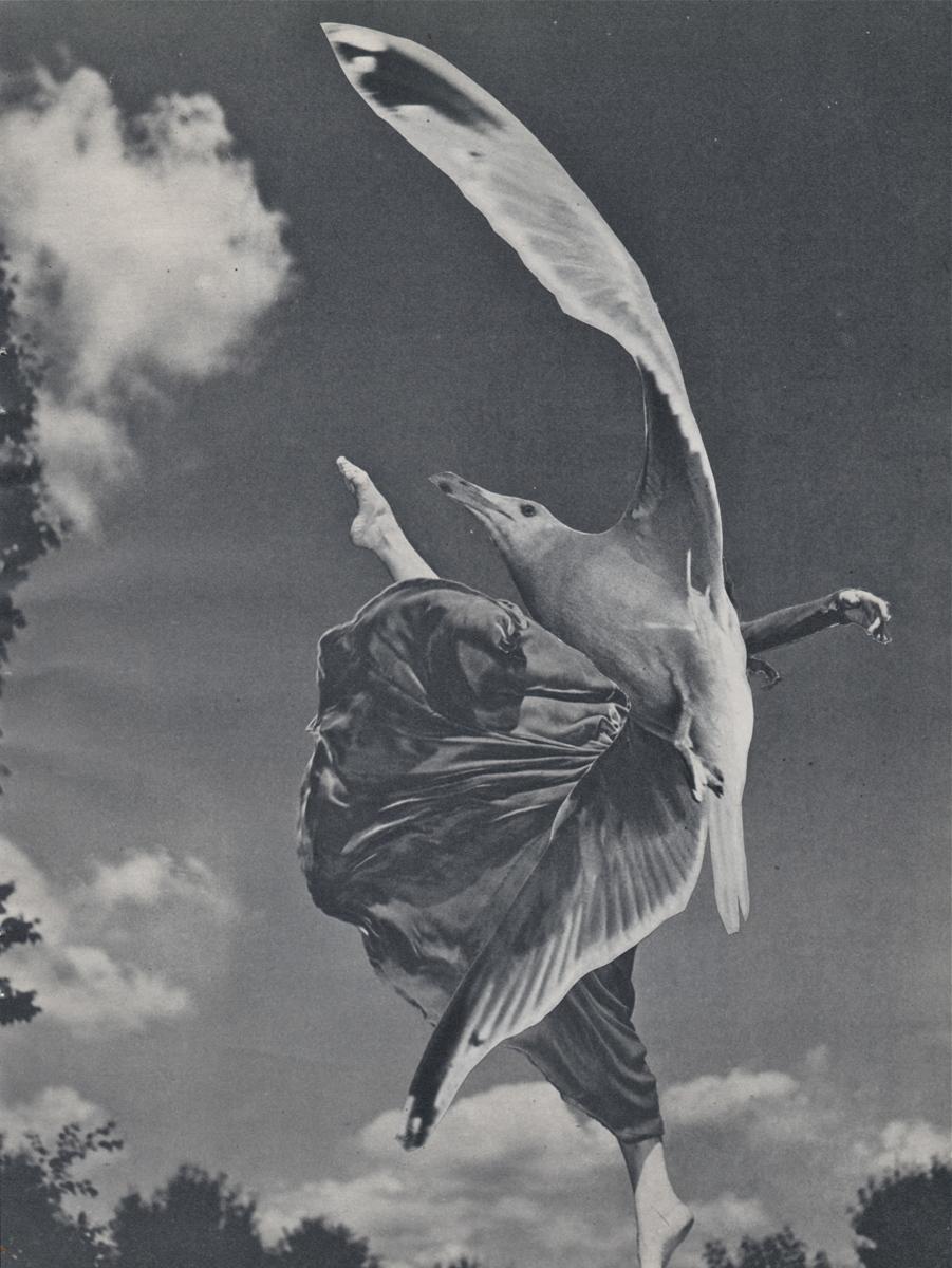 Taking Wing (large view)
