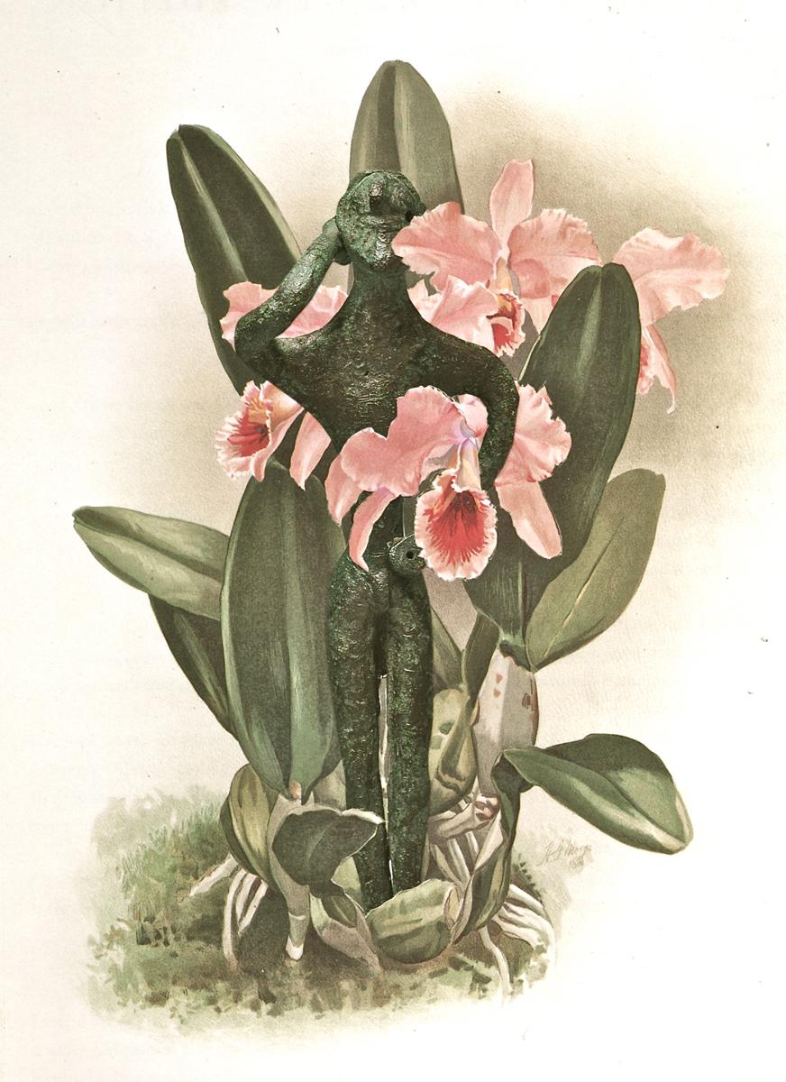 Botanical Boy (large view)