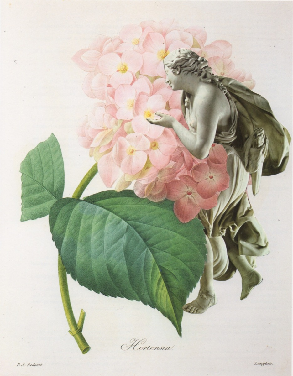 Hortensia (large view)