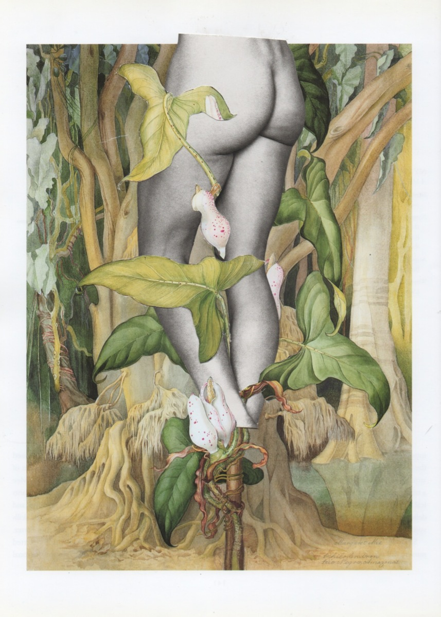 Philodendron (large view)