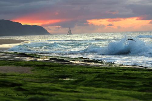 Sail Away Into Sunset  - Hawaii