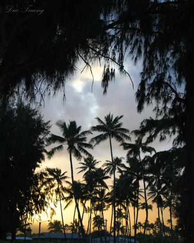 In Between Trees - Kailua Beach