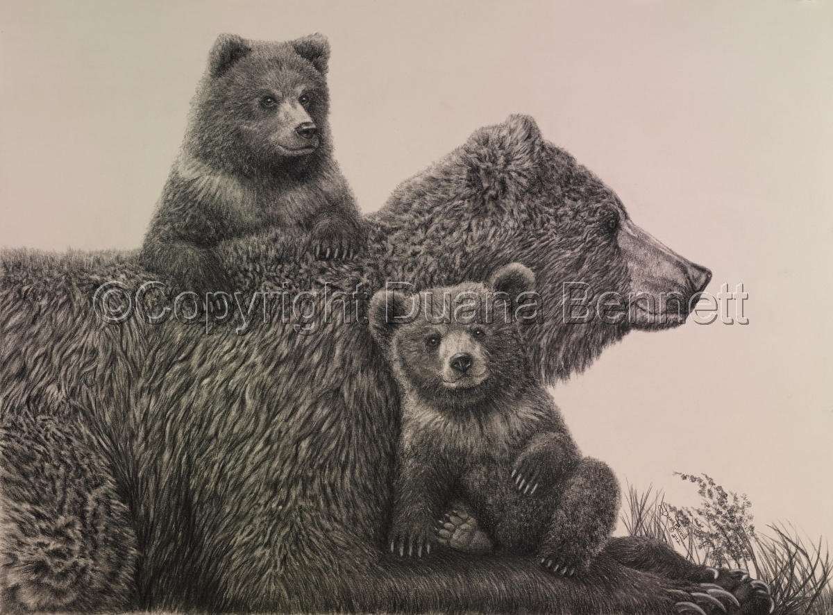 Grizzly Sow with Cubs (large view)