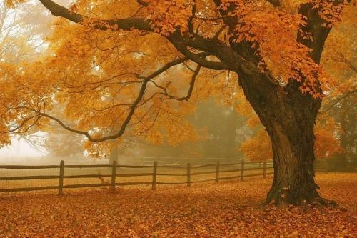 Buckingham Fall