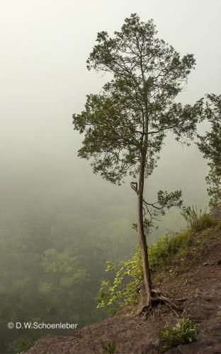 Hig Rock Tree