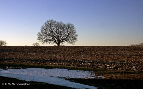 Aquetong Tree