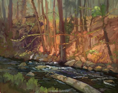 Ringwood Stream1