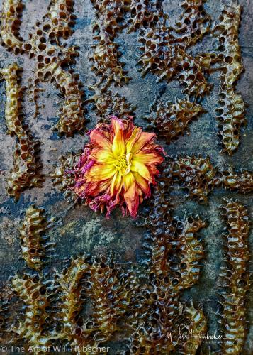 Beehive by The Art of Will Hübscher