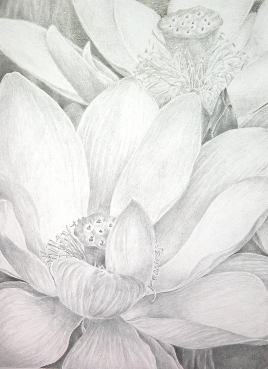 Lotus Garden (large view)