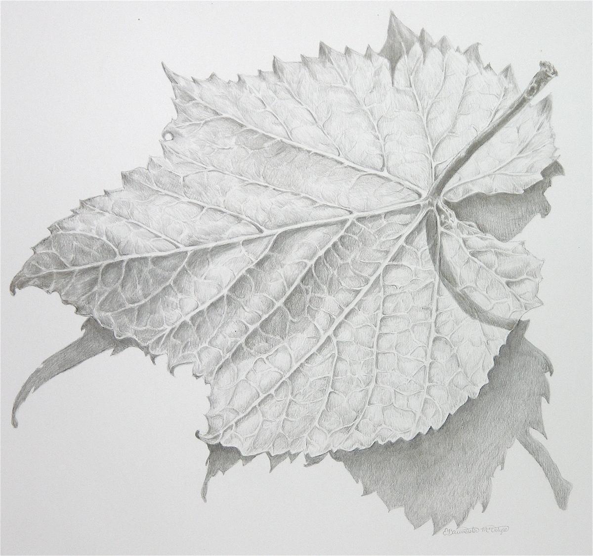 Wild Grape Leaf (large view)